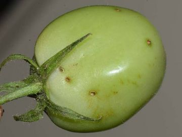 High feed costs leave Kenya reliant on fish imports