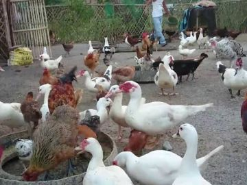 Government promises tea farmers better prices next year with new reforms
