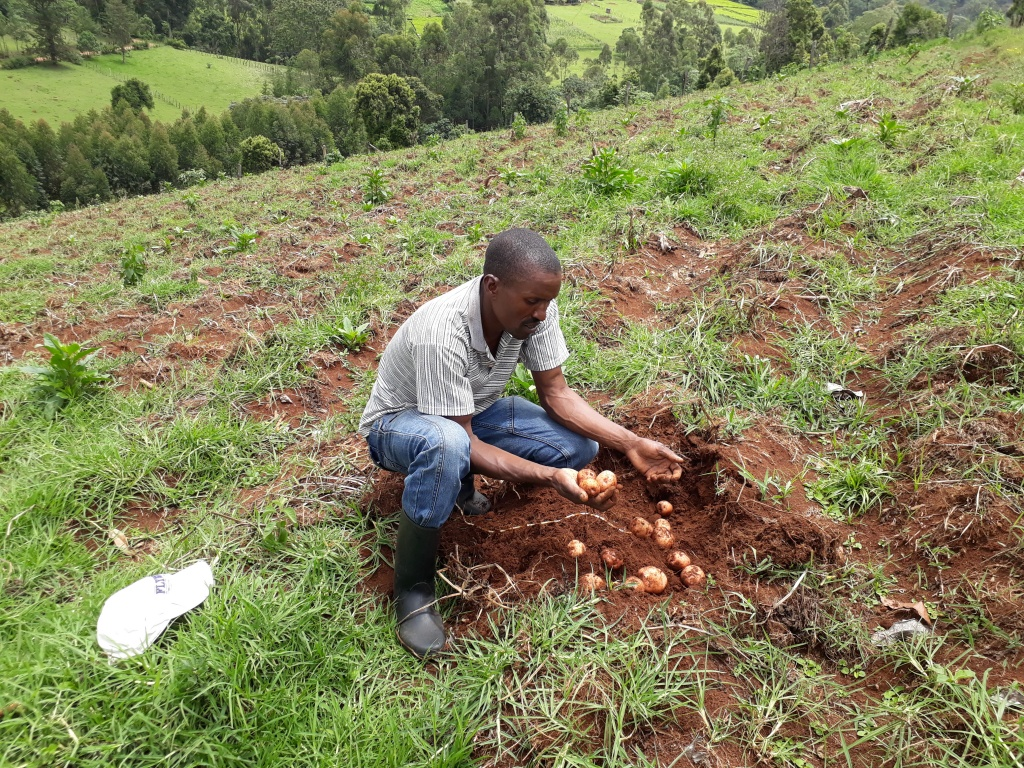 Bomet Potato farmer1.jpg