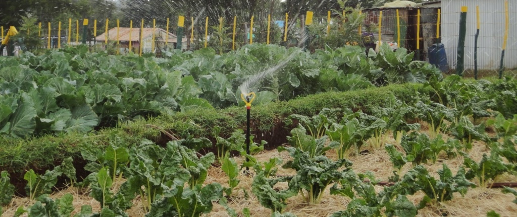 Half an acre family mixed farm becomes a benchmark by other farmers - Profitable crops small plots ...